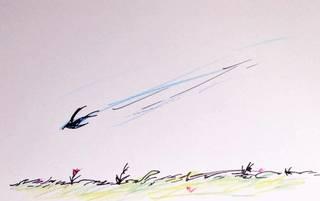 210413燕がきた.jpg